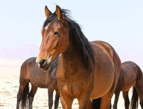 © Namibia Wild Horses Foundation